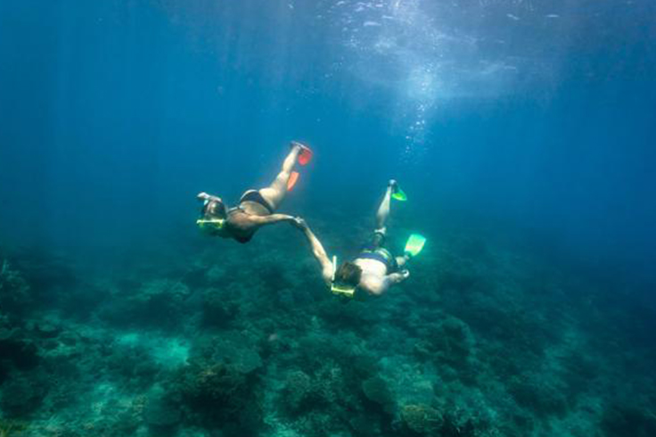 2 people snorkeling along the coral in Queensland
